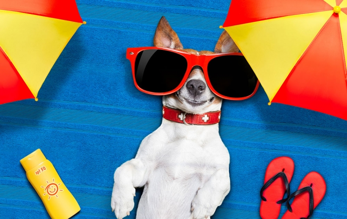 Dogs Need Sunscreen, Too