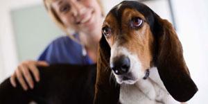 pet-rehab-chiropractor