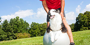 pet-rehab-exercise-therapy