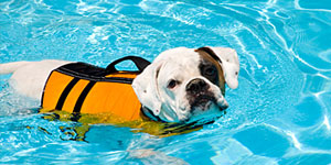 pet-rehab-hydrotherapy