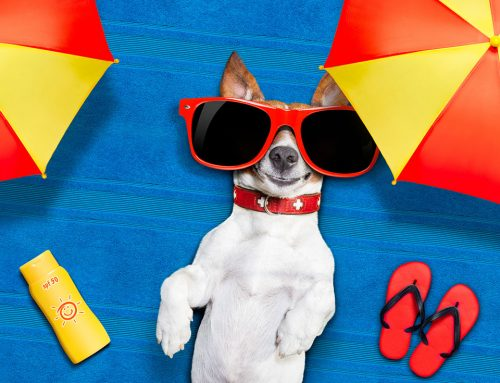 Dogs Need Sunscreen, Too